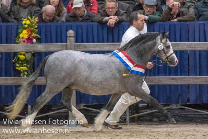 CHK 2019 - Hoekhorst Empire kampioen sectie A. Foto Vivian Hesen