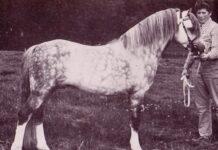 Rondeels Pengwyn