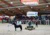Welsh hengstenkeuring 2019, chk, Powerfuls Zenjiro