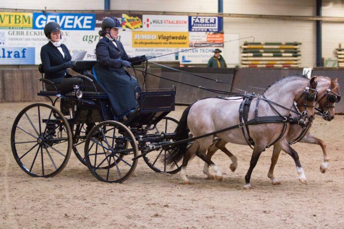 Dieke Slingerland met Rujas Dilly en Rujas Anna. Foto: Nynke Leen