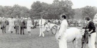 nostalgie: Molenweide's Eelene met veulen Singel's Pinup op jubileumkeuring, 25 jarig jubileum