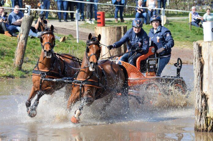Rodinde Rutjens werd tweede bij de tweespannen met de NWR-pony's Kuikhornster Milano en Majan S Swen, beide tienjarige ruinen van Heitrak's Marvin. Foto: Bianca Douwes