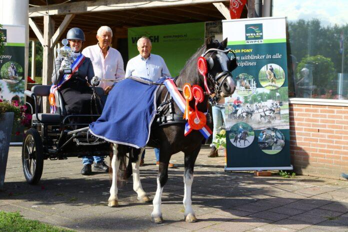 Ellen Wijdenes en Wrentball Red Fox Kampioen NWPCS Sportdag Mennen - Foto Theo ten Brinke