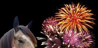 Welshpony en vuurwerk