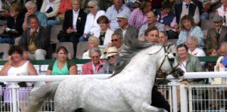 Vechtzicht's Hywel op de Royal Welsh 2005