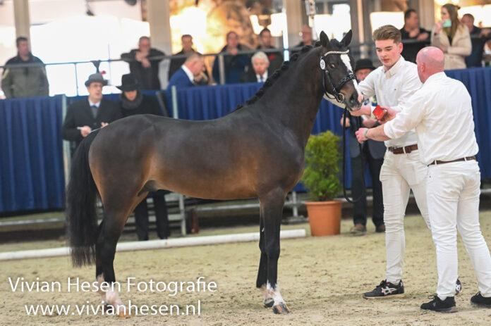 Castenrayseweg's Gentleman. Foto: Vivian Hesen
