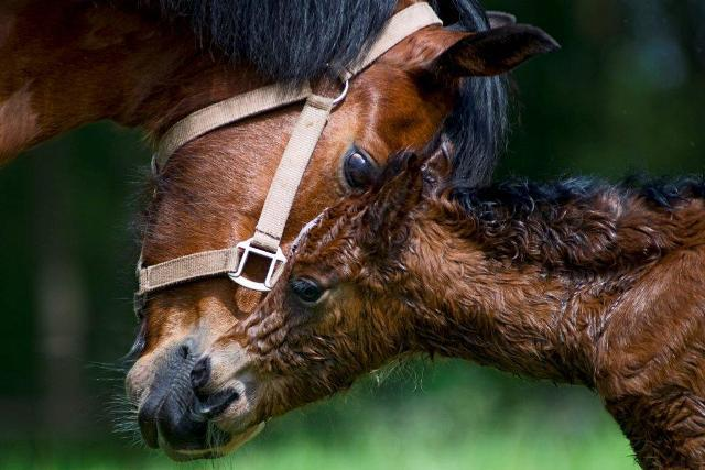 pasgeboren veulen
