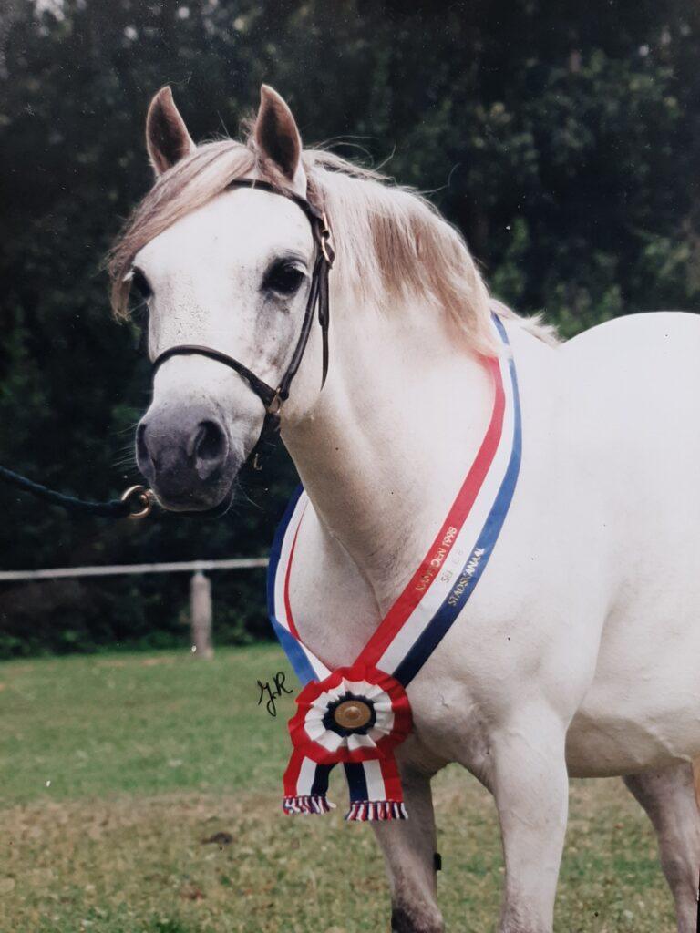 Horsegate Linnet, sectie B kampioen 1998 Stadskanaal.